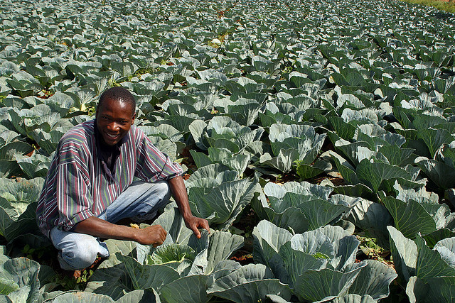 ONG Entreprises Territoires et Développement