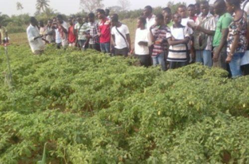 Article : A la découverte de ceux qui nourrissent le Togo 2e Partie