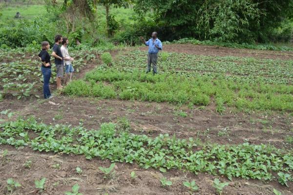 """Résultat de recherche d'images pour """"agriculture biologique du togo"""""""