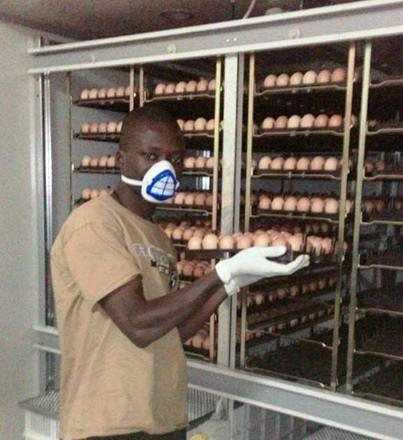 ph: wezon Mr Tchamsi disposant des œufs dans le tiroir