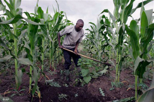 Article : Ressources naturelles et agriculture: une Afrique émergente d'ici 2025