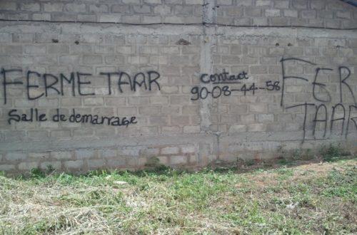 Article : Ferme TAAR : une des grandes fermes agricoles du Togo