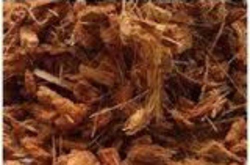 Article : La fibre de coco: un ingrédient pour fertiliser les sols